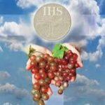 XVII Niedziela Zwykła 25.07.2021